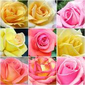 коллаж розы из фотографий — Стоковое фото