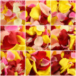 Collage of petals of roses from nine photos — Stock Photo #7831039