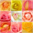 Collage of roses from nine photos — Stock Photo #7834881