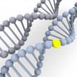 Gene in DNA — Stock Photo