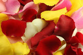 Petals of a rose. — Stock Photo