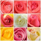 Koláž růží z devíti fotek — Stock fotografie