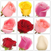 Collage of roses from nine photos — Stock Photo