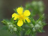 Spring field flowers — Stock Photo