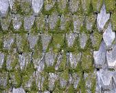 старые деревянные крыши, покрытые мхом. — Стоковое фото