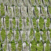 Old wooden roof covered with a moss — Stock Photo