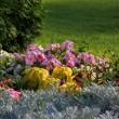 Stock Photo: Flowerbed.