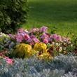 Flowerbed. — Stock Photo