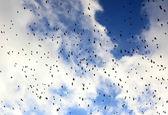 Bando de pássaros — Fotografia Stock