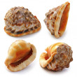 Set of seshell — Stockfoto #6945903