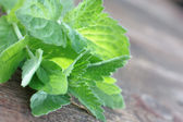 Fresh spearmint — Stock Photo