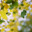 Autumn elm — Stock Photo