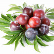 Plum on white background — Stock Photo