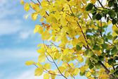 Autumn elm — Foto Stock