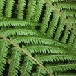 Fern on dark background — Stock Photo