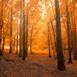 Forest in autumn with light beam — Stock Photo