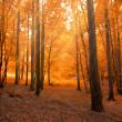 Forest in autumn with light beam - Stock Photo