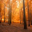 floresta no Outono com feixe de luz — Foto Stock