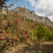 Hawthorn bush in the mountains - Stock Photo