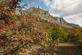 Arbusto de espino en las montañas — Foto de Stock