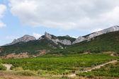 山中のブドウ園 — ストック写真