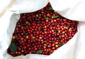 Collected coffee beans — Stock Photo