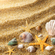 Royalty-Free Stock Photo: Sea shells