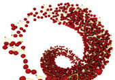 Tasty crab cherry flow isolated on white — Stock Photo