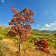Colorful autumn landscape — Stock Photo #6856002