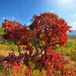 colorful autumn trees — Stock Photo #6857534