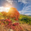 autumn tree — Stock Photo #6910075