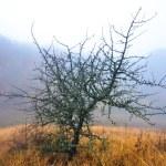Old tree — Stock Photo #7185168