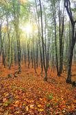 Autumn park — Stok fotoğraf