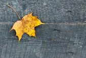 Yellow leaf — Zdjęcie stockowe