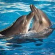 Pair of dolphins dancing — Stock Photo #7339057