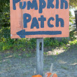 Autumn Fall Halloween Pumpkin Patch — Stockfoto