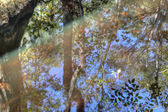 Abstract Reflection — Stock Photo