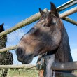 Stock Photo: Horse in paddock