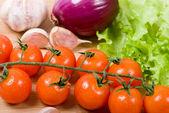 Gros plan de tomates cerises — Photo