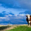 A cow grazes in a meadow. — Stock Photo #6944745