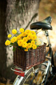 Chrysanthemums in a wicker basket — Stock Photo