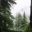Fog after rain in wild forest — Stock Photo