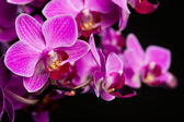 Orchid on black background (shallow DOF) — Stock Photo