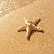 Starfish — Stock Photo #6998234