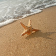Starfish — Stock Photo #6998307