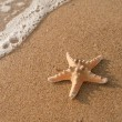 starfish — Stock Photo #6998407