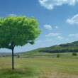 Tree in green meadow — Stock Photo
