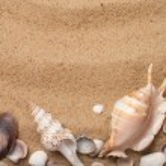 Seashells in sand — Stock Photo