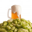 Beer and a hop — Stock Photo