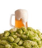 пиво и хоп — Стоковое фото